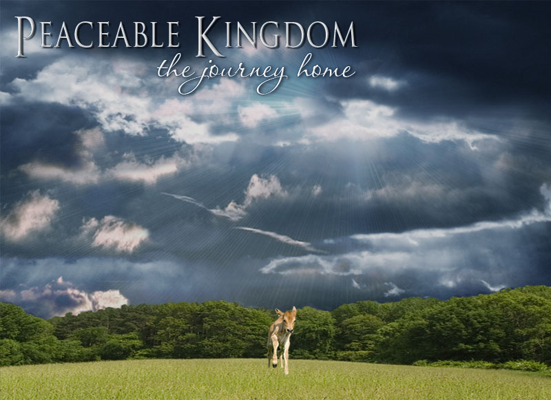 Peaceable Kingdom: The Journey Home, an Award-Winning